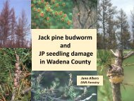 Jack pine budworm and JP seedling damage in Wadena County