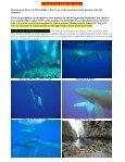 Dolphin Underwater & Adventure Club June 2012 Newsletter - Page 3