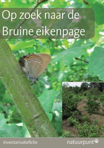 Bruine eikenpage - Natuurpunt