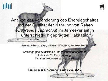 Scheingraber_Analyse der Veränderung der Energiegehaltes.pdf