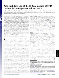 Auto-inhibitory role of the EF-SAM domain of STIM proteins in store ...