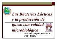 Qué son las bacterias lácticas