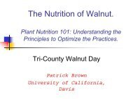 The Nutrition of Walnuts - Kings County