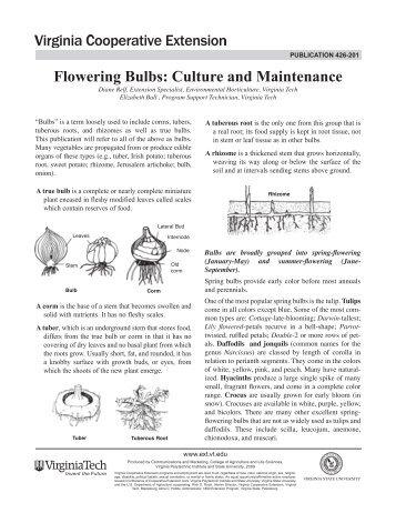 Flowering Bulbs: Culture and Maintenance - Virginia Tech