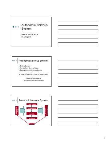 chapter 15 lecture outline autonomic nervous system and visceral. Black Bedroom Furniture Sets. Home Design Ideas