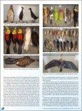 Coleção de aves do Laboratório de Zoologia da UNOESC, Santa ... - Page 2