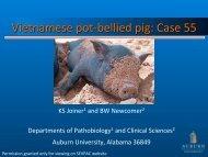 Vietnamese pot-‐bellied pig: Case 55