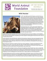 Wild Horses - World Animal Foundation