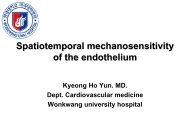 Spatiotemporal mechanosensitivity of the endothelium