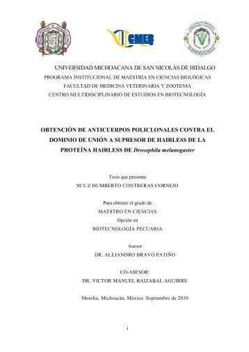 obtenciom de anticuerpos policlonales contra el dominio de union a ...