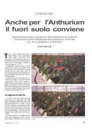 Anche per l'Anthurium il fuori suolo conviene - Accesso alla base ...