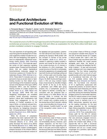 Structural Architecture and Functional Evolution of Wnts