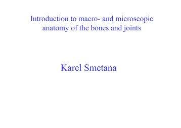 Karel Smetana - Anatomický ústav 1.LF UK