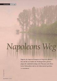 Pappeln: Napoleons Wegweiser - Natürlich
