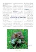 Zeehonden aan de Belgische kust - Zoogdierwinkel - Page 4