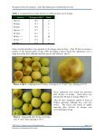 Firmness Loss in Gingergold Apples - Postharvest Information Network - Page 3