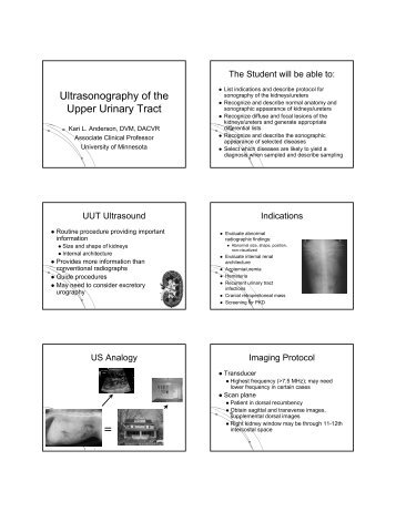 Ultrasonography of the Upper Urinary Tract - University of Minnesota