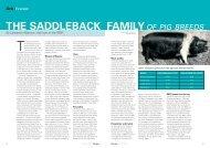 the saddleback familyof pig breeds - Rare Breeds Survival Trust