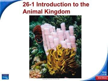26-1 Introduction to the Animal Kingdom - Hamilton Local Schools
