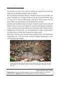 Geopunkt 34 - Geopark Karnische Alpen - Page 2