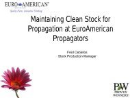 Maintaining Clean Stock for Propagation at EuroAmerican ...
