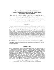 Morphological and molecular characterization of Colletotrichum ...
