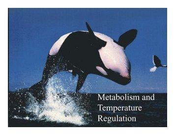 Metabolism and Temperature Temperature Regulation