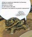 Un invierno muy abrigador - Sylvan Dell Publishing - Page 6