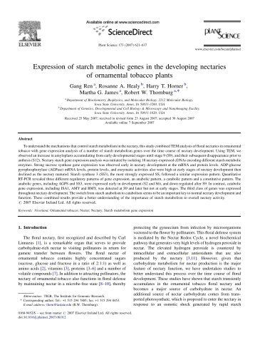Expression of starch metabolic genes in the developing nectaries of ...