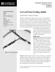 Leaf and Stem Feeding Aphids - Coming Soon!