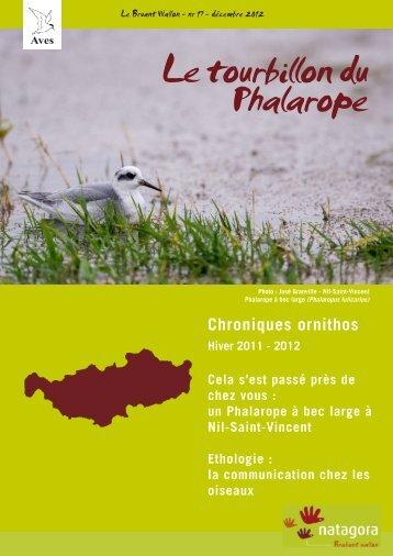 Le tourbillon du Phalarope - Natagora