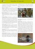 Le tourbillon du Phalarope - Natagora - Page 5