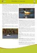Le tourbillon du Phalarope - Natagora - Page 6