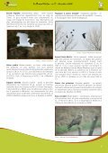 Le tourbillon du Phalarope - Natagora - Page 7
