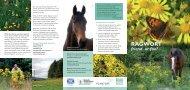 Ragwort Friend or Foe Leaflet - British Horse Society
