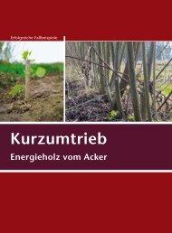 Kurzumtrieb - Energieholz vom Acker - Biomassehöfe Stmk