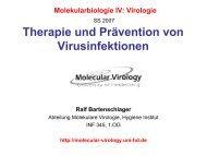 Therapie und Prävention von Virusinfektionen