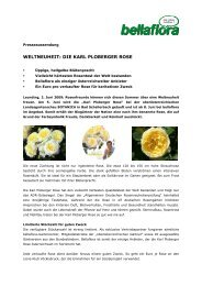 WELTNEUHEIT: DIE KARL PLOBERGER ROSE - Bellaflora
