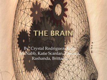 The Brain - Faculty Web Pages