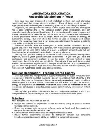 pre lab yeast fermentation Lab 5 alcoholic fermentation (revised fall 2009) adapted from experiment 12b in biology with computers lab 5 - biol 211 - page 1 of 15 lab 5 alcoholic fermentation in yeast prelab assignment before coming to lab, read carefully the introduction and the procedures of this experiment, and then answer the prelab questions at the end of this lab handout.