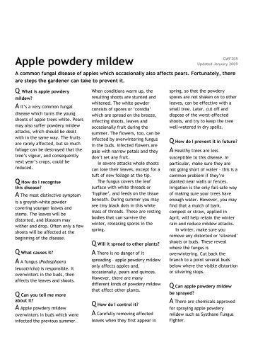 Apple powdery mildew - Which.co.uk
