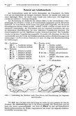 Cytoarchitektonische Untersuchungen am Striatum - Atlas of the ... - Page 2