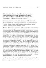 Mitochondrial Contact Sites Detected by Creatine ... - Gpb.sav.sk