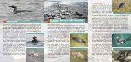 Dabas aizsardzības un piekrastes zvejas interešu harmonizācija ...
