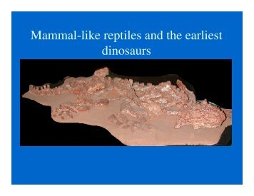 Mammal-like reptiles and the earliest dinosaurs