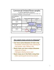 Commercial Orchard flower samples: Are seed crops prone to ...