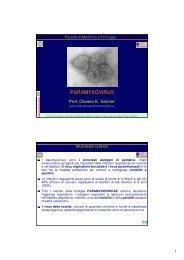 PARAMYXOVIRUS - Sezione di Microbiologia