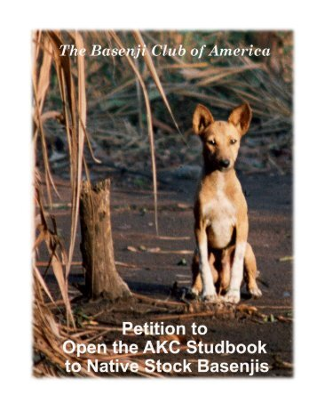 Petition to Open the AKC Studbook to Native Stock Basenjis