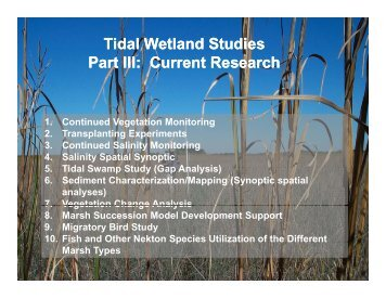 Tidal Wetland Studies Part III: Current Research - University of Florida