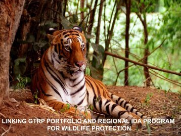 Regional IDA Program - Global Tiger Initiative